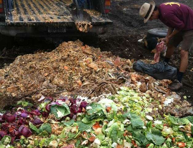 Campus composting programs effective in educating students