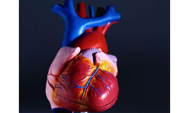 Candesartan doesn't prevent trastuzumab cardiotoxicity