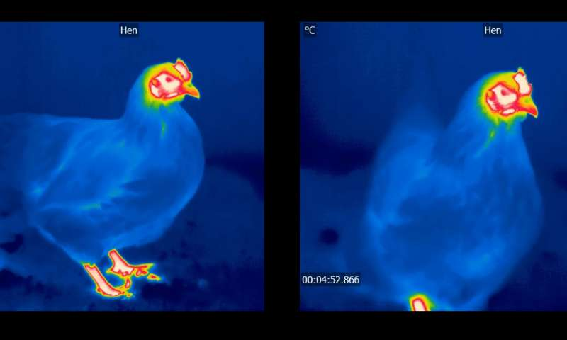 Caption: Spot the difference: heat sensitive cameras can reveal information that the human eye can't see.