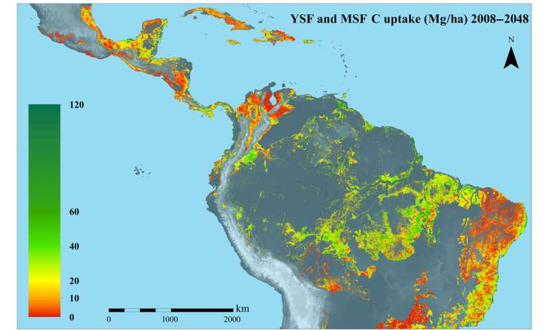 Carbon capture is substantial in secondary tropical forests