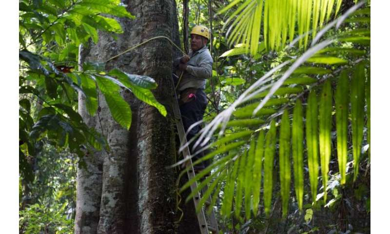 Cause for hope: Secondary tropical forests put on weight fast