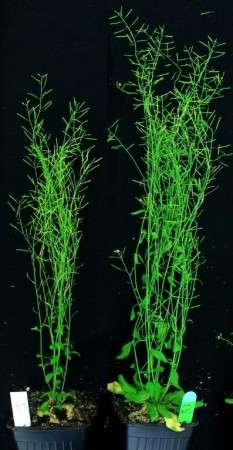 Chance finding could transform plant production