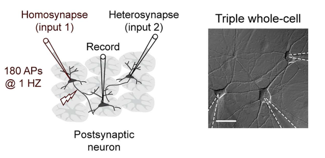 Change in the brain: Astrocytes finally getting the recognition they deserve