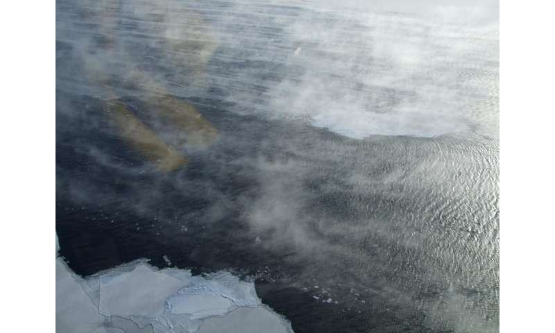 Changes in Antarctic sea ice production due to surrounding ice conditions.