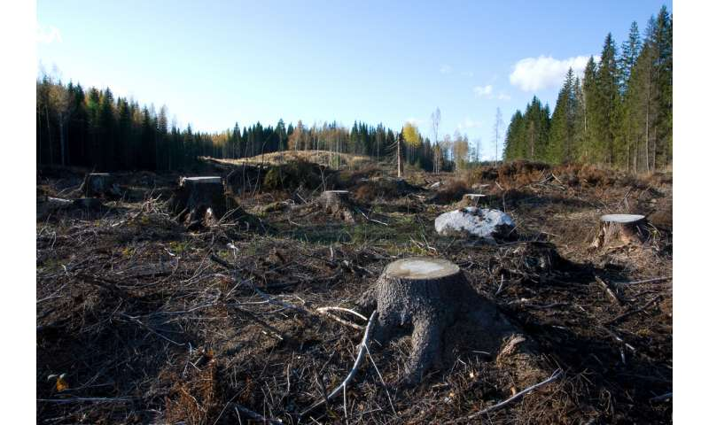 Clear-cutting destabilizes carbon in forest soils, Dartmouth study finds