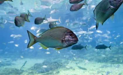 Clever fish avoid being caught in angling hotspots