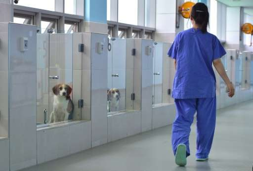 Cloned dogs at a care room of the Sooam Biotech Research Foundation in Seoul