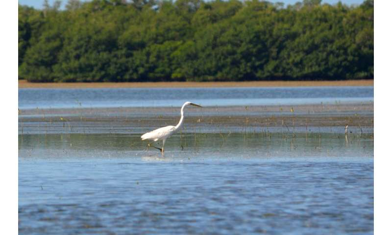 Coastal birds rely on tides and moon phases