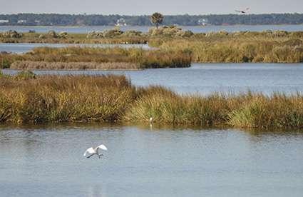 Coastal wetlands save hundreds of millions of dollars in flood damages during hurricanes