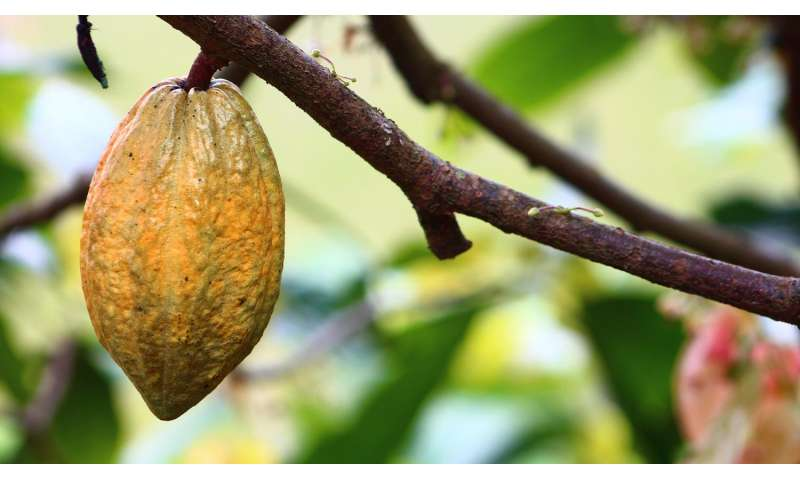Cocoa compound linked to some cardiovascular biomarker improvements