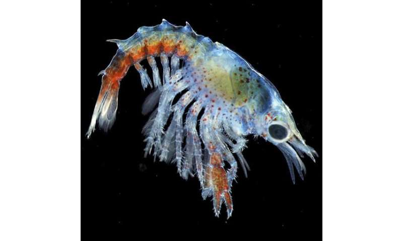 Colorful baby lobster photo wins award for Maine biologist