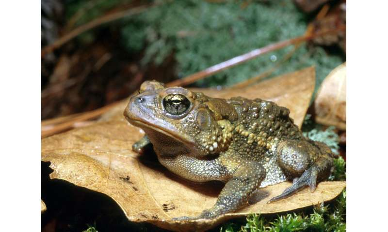 Combined effects of copper, climate change can be deadly for amphibians, research finds