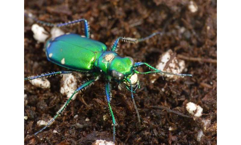 Common insecticides are riskier than thought to predatory insects