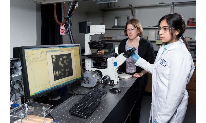 Common nanoparticle has subtle effects on oxidative stress genes