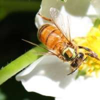 Concern over parasites affecting honey bees