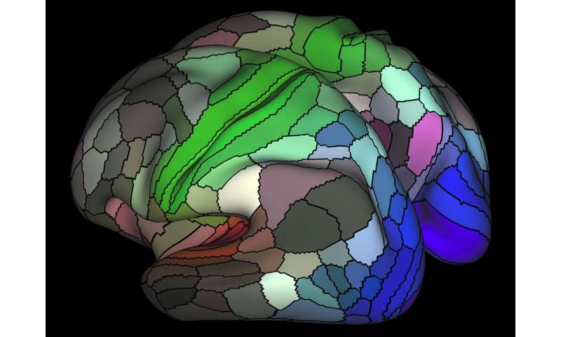 Connectome map more than doubles human cortex's known regions