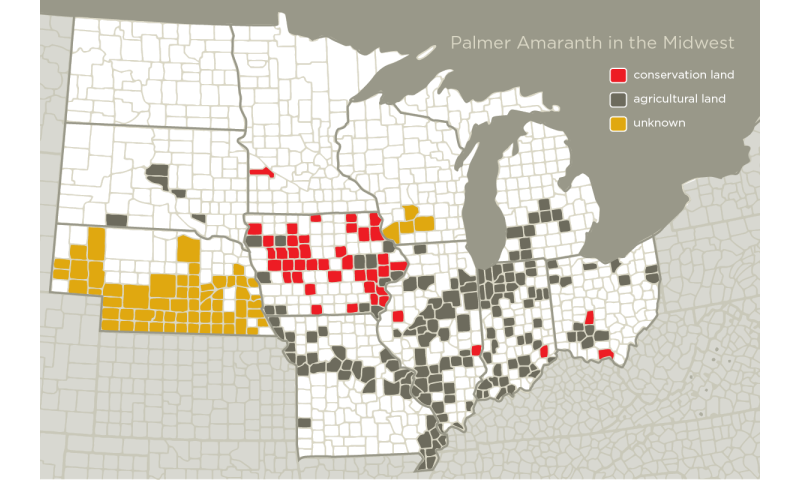Conservation effort spreads seeds of destruction across the Midwest