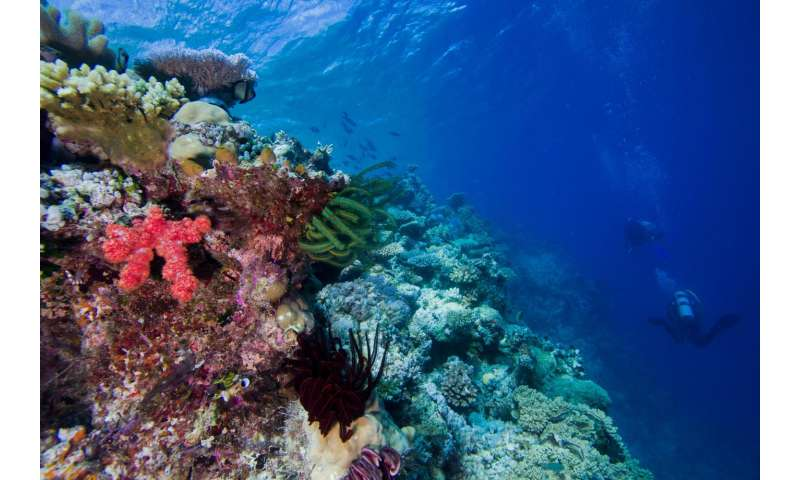 Continental drift created biologically diverse coral reefs
