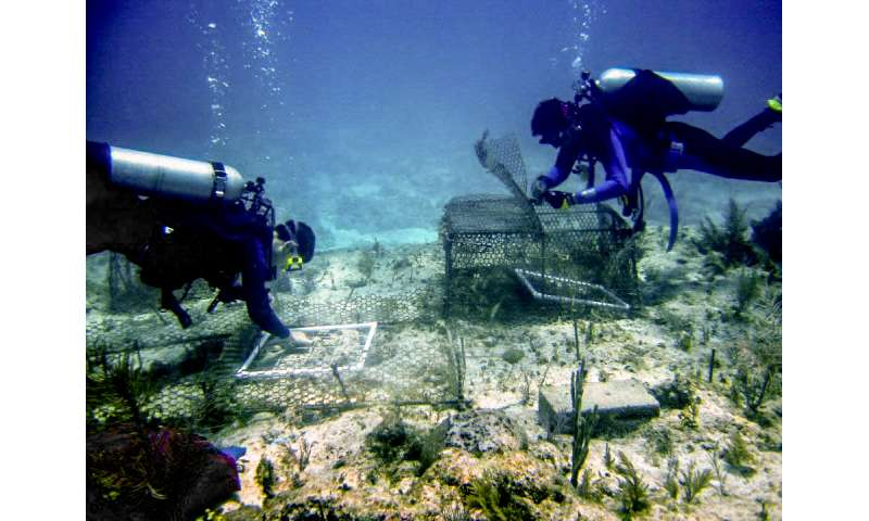 Coral reefs fall victim to overfishing, pollution aggravated by ocean warming