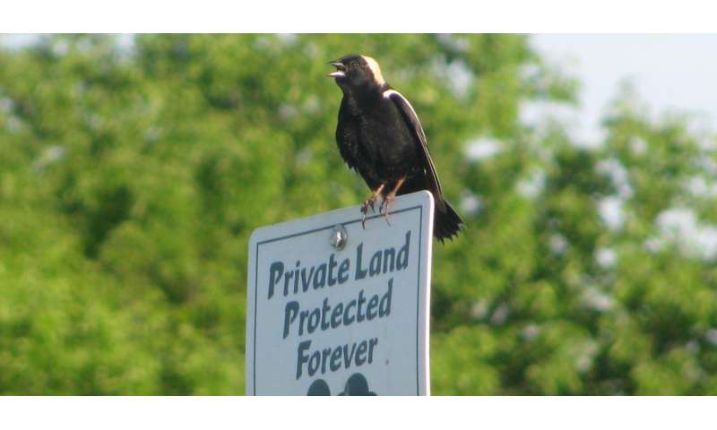 Cornell and Land Trust Alliance partner to protect birds on private land