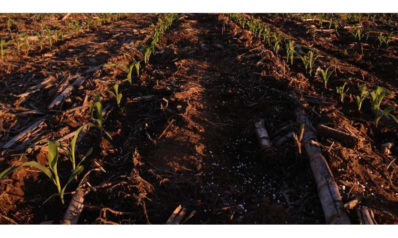 Corn yield modeling towards sustainable agriculture