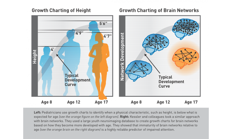 Could a brain 'growth chart' spot attention problems early? New study suggests so