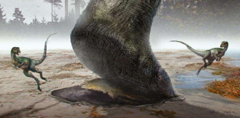 Could big dinosaurs swim? Scientists follow the footprints