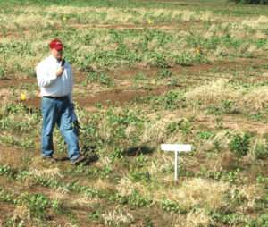 Cover crop costs recovered on Rolling Plains cotton
