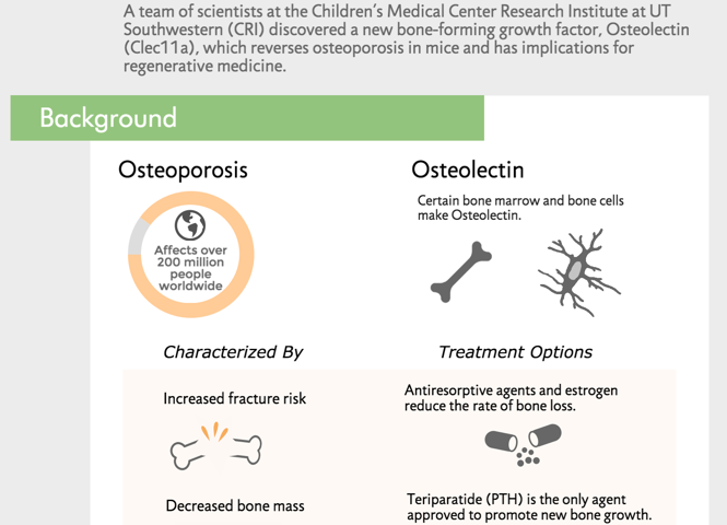CRI scientists discover new bone-forming growth factor that reverses osteoporosis in mice