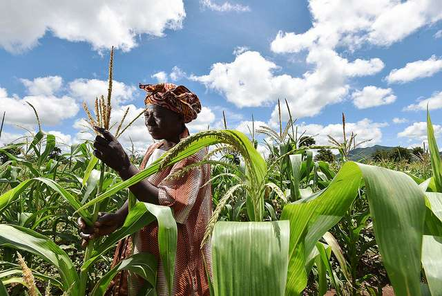 Crop breeding is not keeping pace with climate change