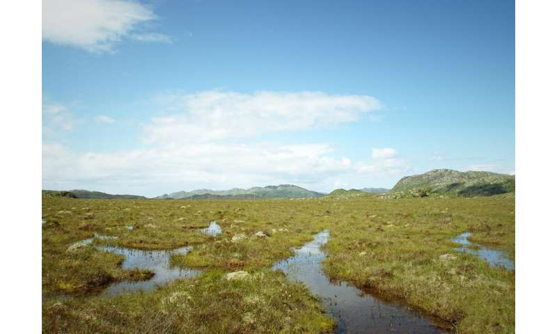Crucial peatlands carbon-sink vulnerable to rising sea levels