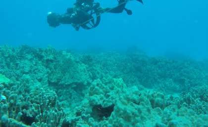 Current global coral bleaching set to continue
