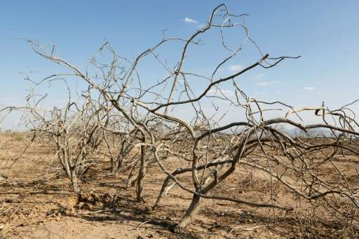 Dead pistachio trees are seen in a abandoned village near the southern Iranian city of Sirjan