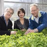 Decoding clover DNA leads to better livestock productivity