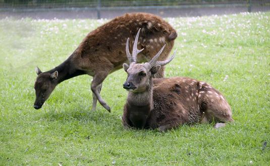 Deer evolution: Ancient DNA reveals novel relationships