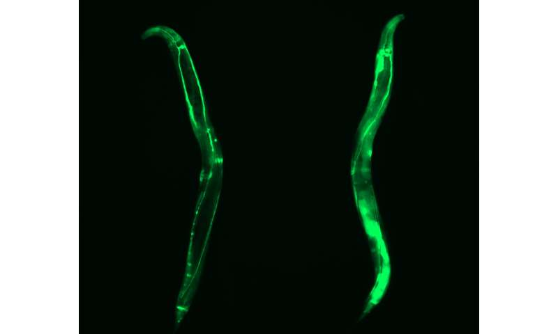 Defining immortality of stem cells to identify novel anti-aging mechanisms