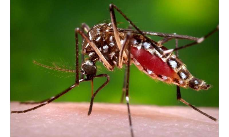 Dengue vaccine enters phase 3 trial in Brazil