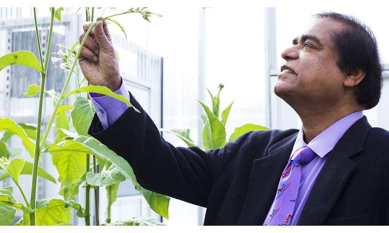 Dental team tweaks DNA to improve plant-based medicines