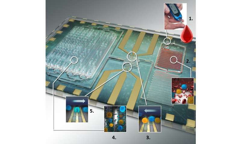 Differential immuno-capture biochip offers specific leukocyte counting for HIV diagnosis