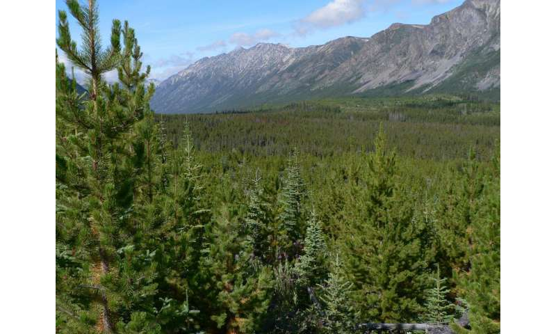 Different Tree Species Use the Same Genes to Adapt to Climate Change, Researchers Find