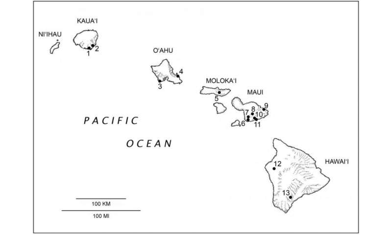Discovery of extinct bat doubles diversity of native Hawaiian land mammals