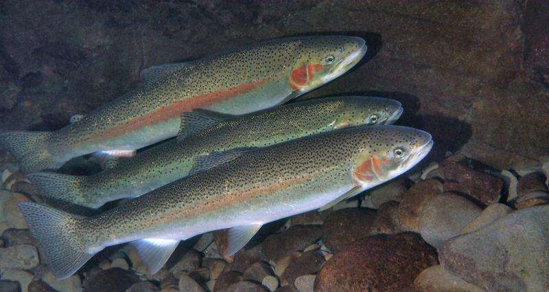 DNA evidence shows that salmon hatcheries cause substantial, rapid genetic changes