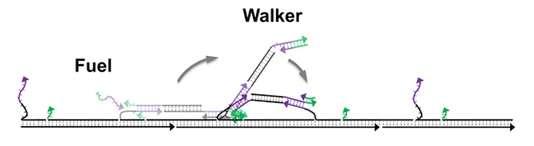 DNA nanomotor