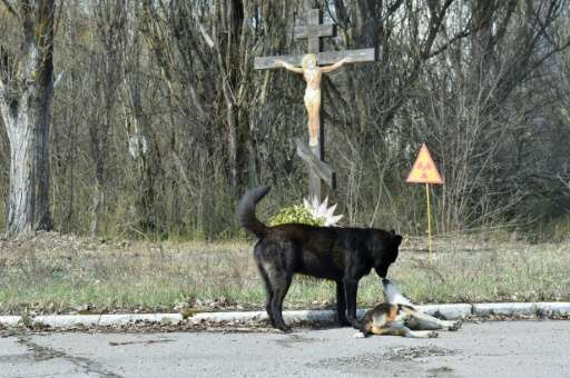Dogs are pictured near a radioactive sign near a crucifix in the ghost city of Prypyat near Chernobyl Nuclear Power Plant on Apr
