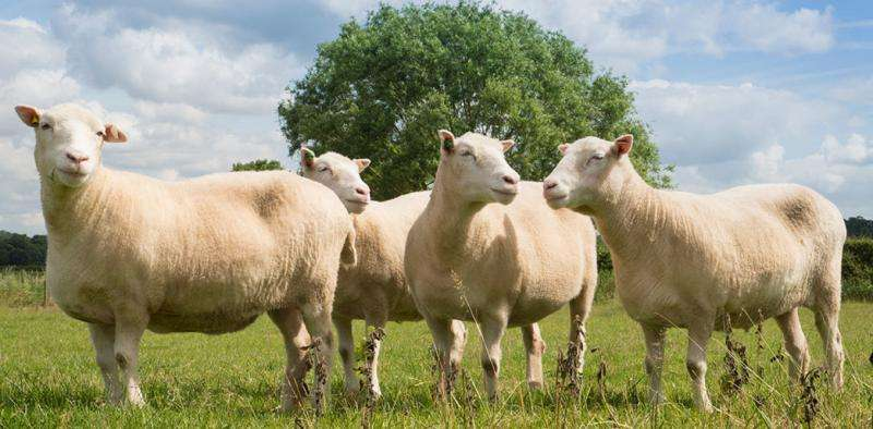 Dolly's 'sisters' show cloned animals don't grow old before their time