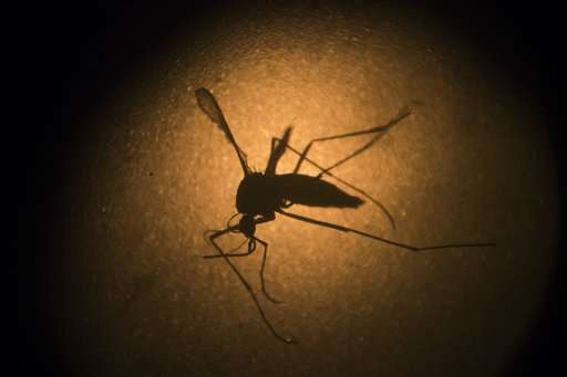 Dominican agency: 2 new deaths from Zika-related syndrome