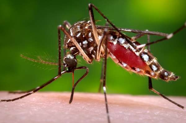 Doubling down on dengue