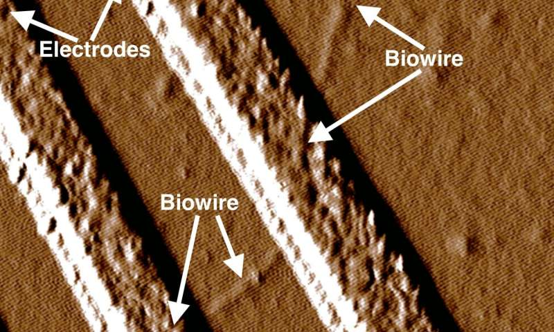 Down to the wire: ONR researchers and new bacteria