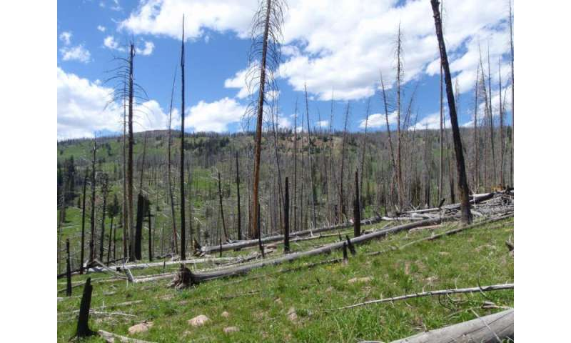 Drought alters recovery of Rocky Mountain forests after fire