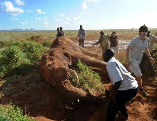 Each collared elephant is tracked on a map overlaid with land use, logging their movements, helping experts to monitor the impac
